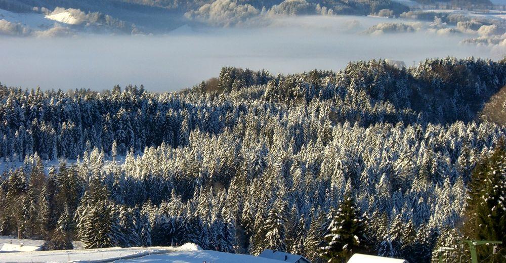 Pisteplan Skigebied Thalgau