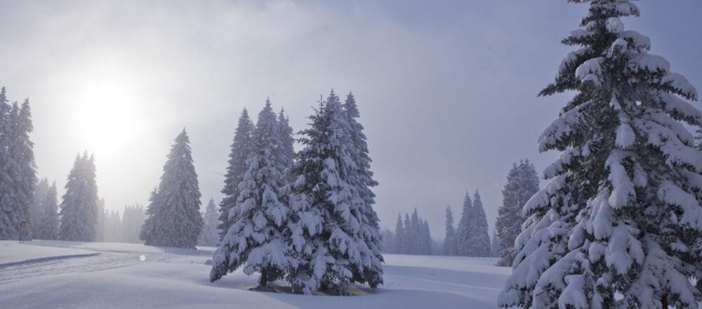 Loipenplan Les Genevez / Franches-Montagnes