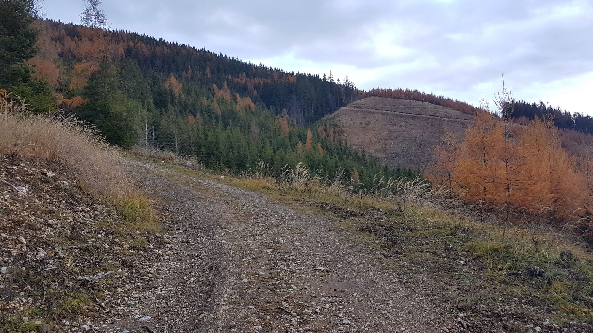 Singlebrse in Steiermark und Singletreff - flirt-hunter