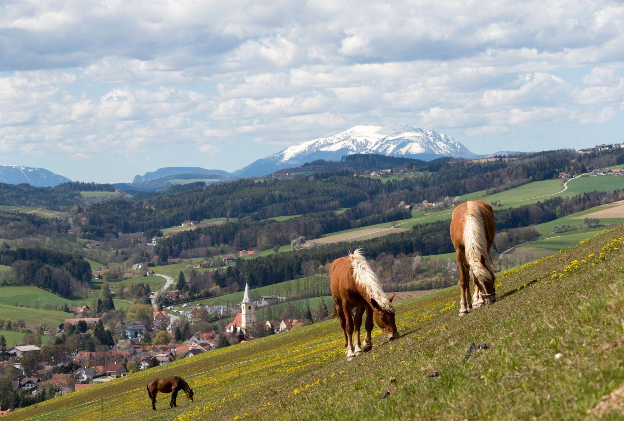 Krumbach in Niedersterreich - Home - Bildungsangebote